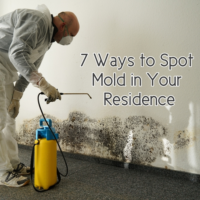 7 Ways to Spot Mold in Your Residence